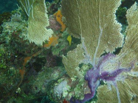 Lovely fan coral