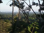 Another view of the forested plains over toward the coast from above MMRF.: by rachel_and_daniel, Views[271]