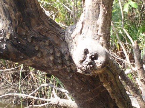 Bats roosting (until we disturbed them...)