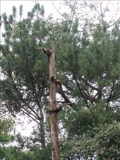 Coatimundi´s take lounging to extreme lengths.  Hilarious.: by rachel_and_daniel, Views[338]