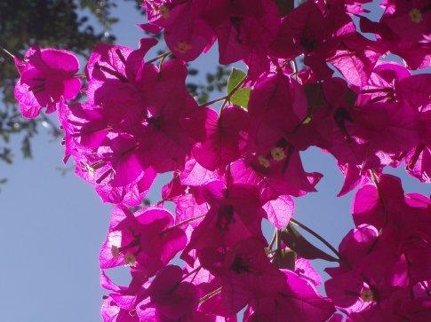 Flowers, La Paz.