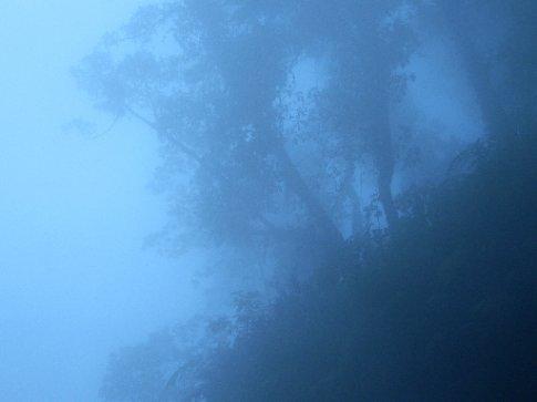 Trees through the mist at Fuentas Georginas