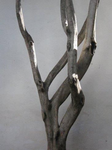 Tree, museum of modern art, Oaxaca