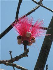 Tree flower, botanical gardens, Oaxaca: by rachel_and_daniel, Views[410]
