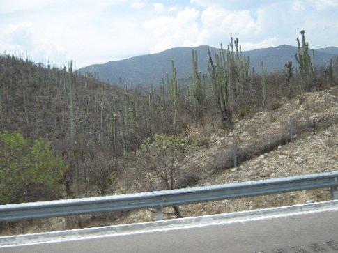 Oaxaca>Mexico City - endless cactus desert