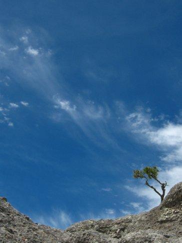 The bleak Sierra