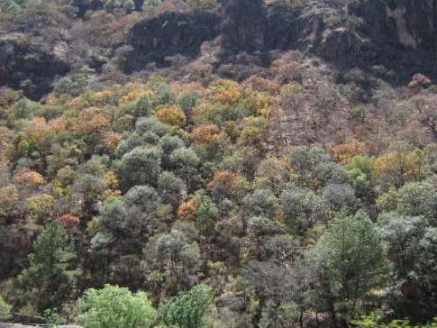 The trees start to turn in the canyon