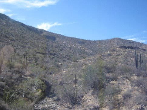 Cactus scrub stretches out as far as you can see