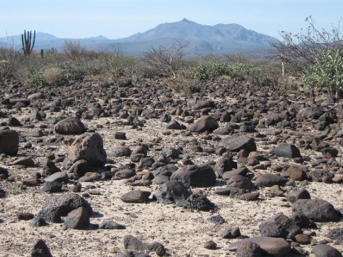 Sun-bleached cactus scrub above San Ignacio