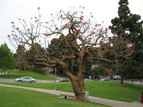 Lovely tree, San Diego