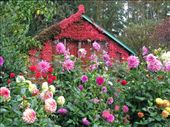 Garden Shed, Butchart Gardens, Brentwood Bay near Victoria, Vancouver Island, British Columbia: by rachele829, Views[1114]
