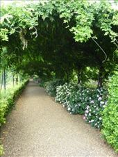 Hydrangea Walk in the Bardini Gardens: by rachthe1st, Views[163]