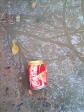 Crushed and thrown away, the way to treat empty cans even the brand is Coca Cola: by rain, Views[195]