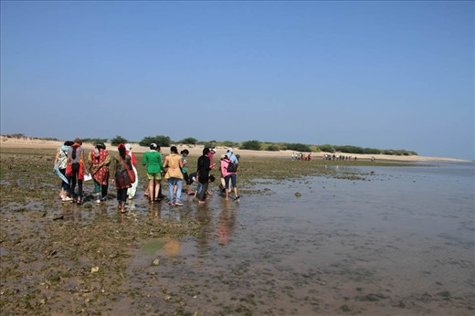pic 3 Exploring the beach during low tide to learn about different marine life, like shells, algae, anemon, corals, crabs, octopus and many more. large number of birds are also seen like, crab plovers, oyster catchers, sand plovers etc.