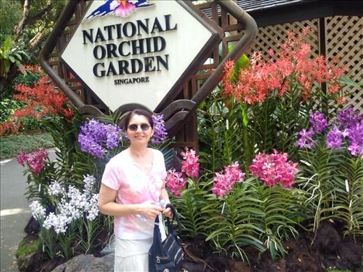 orcihd garden