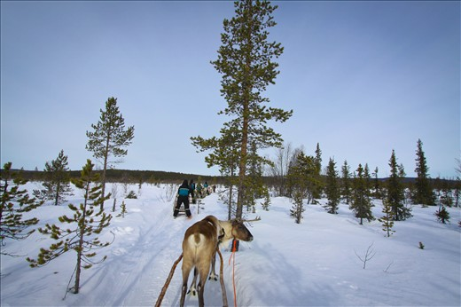 A taste of sapmi traditional way of transportation