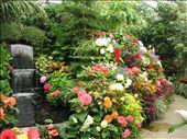Hot house Flowers: by randywakefield, Views[181]