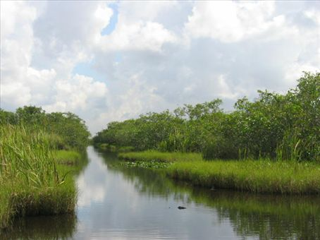Airboat Path Thru the Everglades
