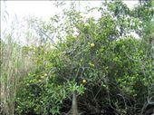 Swamp Apples: by randywakefield, Views[591]
