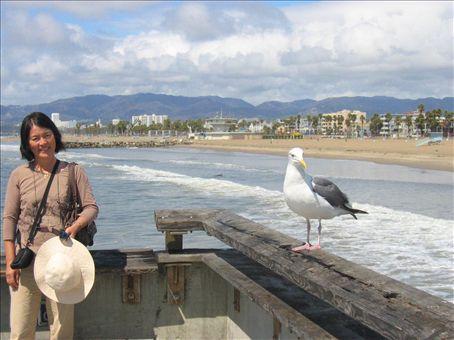 Birds at Santa Monica