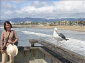 Birds at Santa Monica: by randywakefield, Views[214]