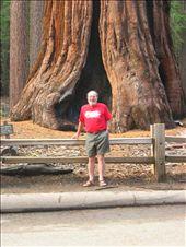 BIG TREE with MAN: by randywakefield, Views[164]