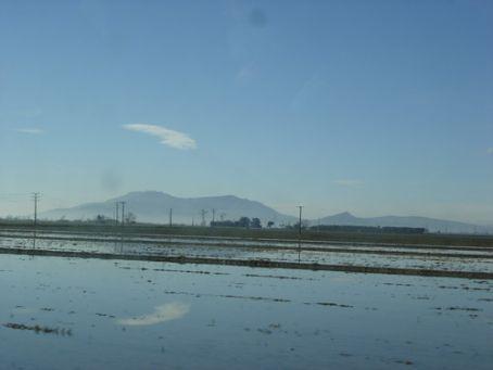 Miles and miles of rice paddies at the Delta d'Ebre, Catalunya