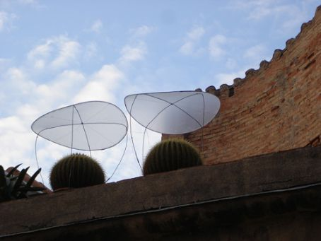 Cacti sunshades??