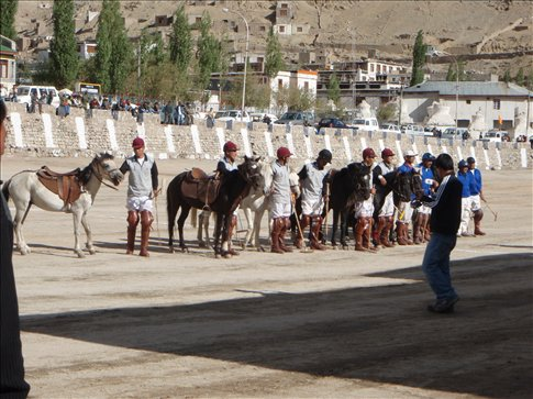 All lined up for polo