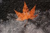 The fall surrenders, choose your way for the winter.: by republicofmacedonia, Views[81]
