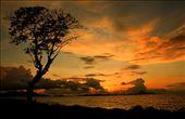 pohon itu seolah sedang melihat sunset yang indah dipesisir pantai aceh.: by rezahidayat, Views[338]