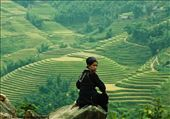 Hmong women looking at rice terraces. Sapa, Vietnam.: by rice, Views[1871]