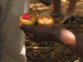 Nutmeg...we think: by rich, Views[190]