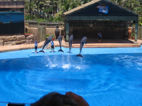 Dolphins performing
