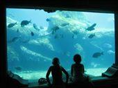 Kids @ Aquarium: by rich, Views[214]