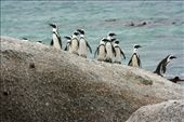 Penguins at Boulders Beach: by rich, Views[250]