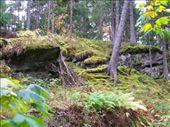 Byåsen woods, Trondheim.: by richie, Views[237]