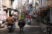 Udaipur street: by rickshawalas, Views[589]