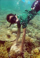 go deep, explore menjangan Island: by riskyudha, Views[126]