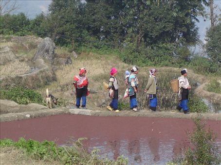 Bada rice paddy work crew
