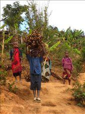 tanzanian men carrying wood, Usumbara mountains: by roamingtheworld, Views[316]