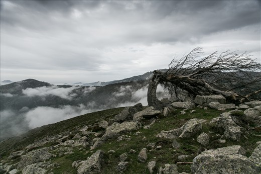 mountain top after a long climb up, only me, this tree and the hammering wind