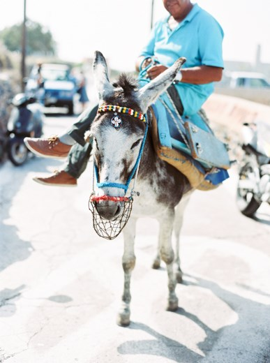 A strong donkey transports his master and tourists alike around the island of Santorini. We like them better free in a field!