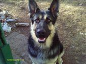 My Dog Rickashae: by rockymountainnative, Views[95]