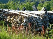 stockfish - dried cod: by romsterrom, Views[266]
