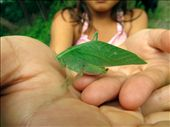 Carla examines the leaf bug she spotted camouflaged in the woods.: by ronnykhalil, Views[78]