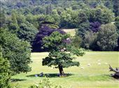 Copper Beeches in Chatsworth Park: by ronsan, Views[261]