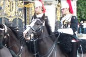 Household Cavalry outside Buckingham Palace: by ronsan, Views[222]