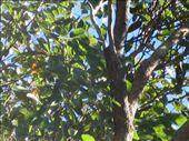 My first glimpse of a koala: by rowenah, Views[135]