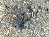 A crab right underneath the tori: by roxyfish, Views[142]